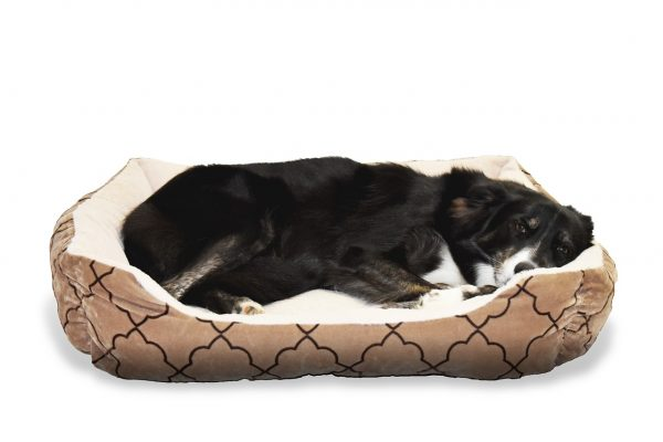 Discussing The Many Important Uses Of Dog Beds – An Easy Guide